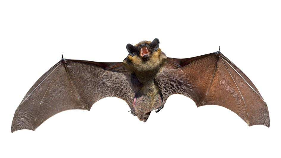 bat-myths-silo.jpg.adapt.945.1