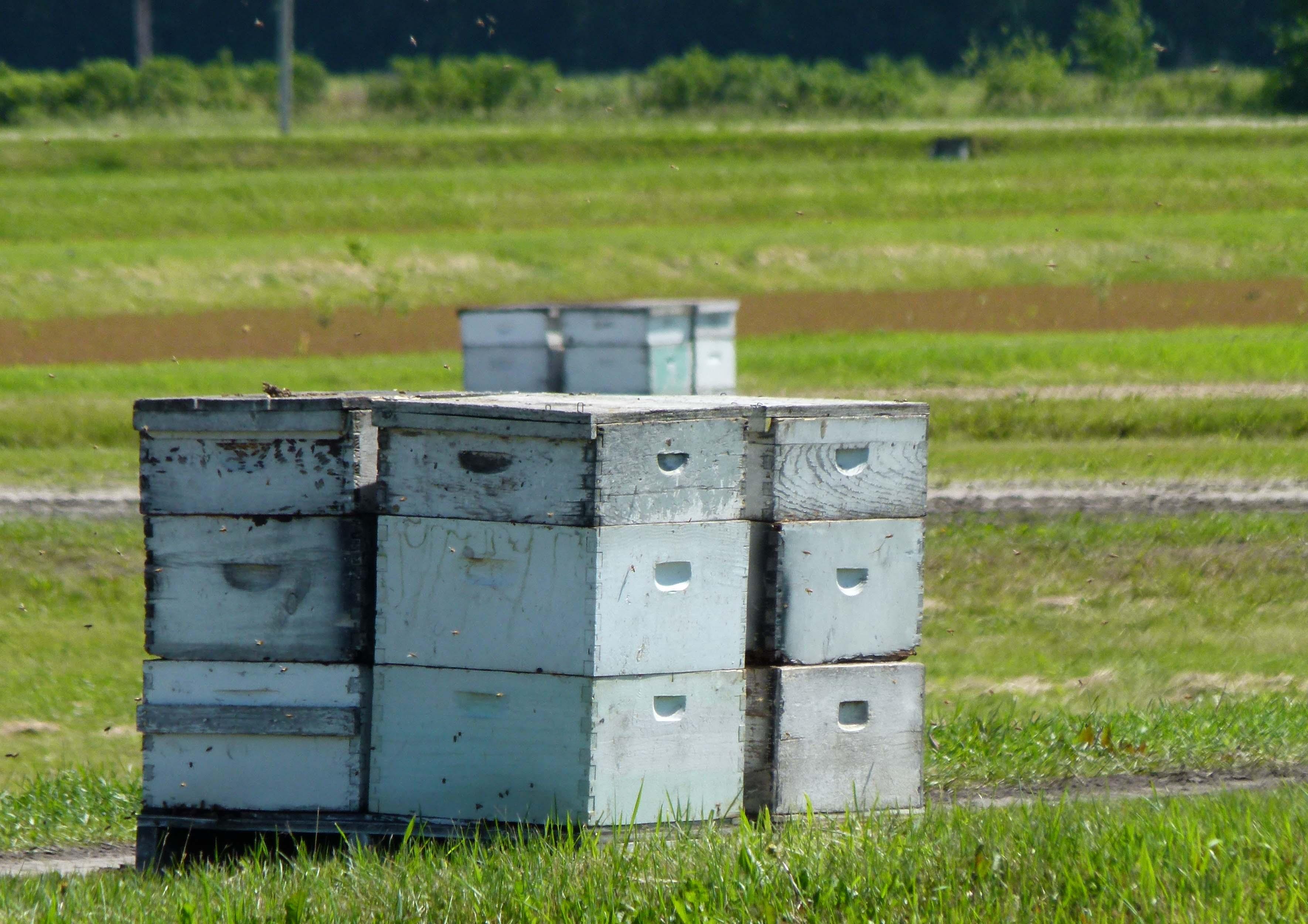 honey-bee-hives-SMALL